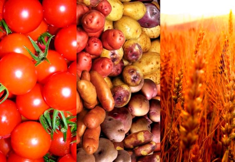 tomate papa