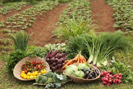 La-ONU-dice-que-las-cosechas-organicas-a-menor-escala-son-la-mejor-forma-de-alimentar-al-mundo_large