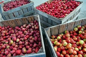 manzanascajas-Portalfruticola1