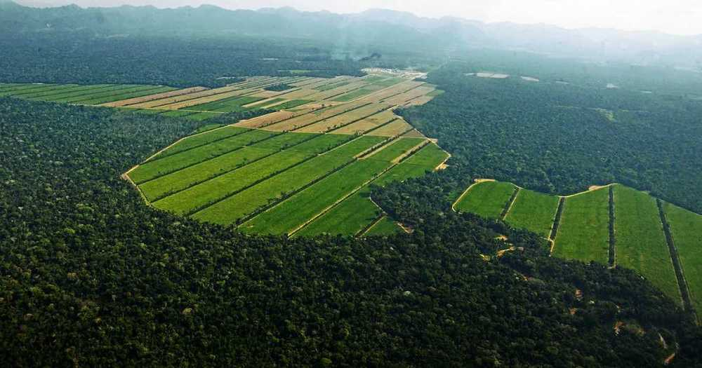 deforestación en bolivia.jpg