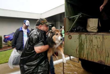 Volunteers load pets into a collector's vintage military truck to evacuate them from flood waters from Hurricane Harvey in Dickinson